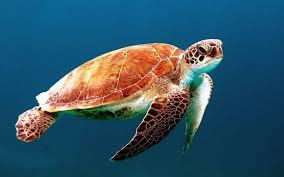Turtle (KASA)